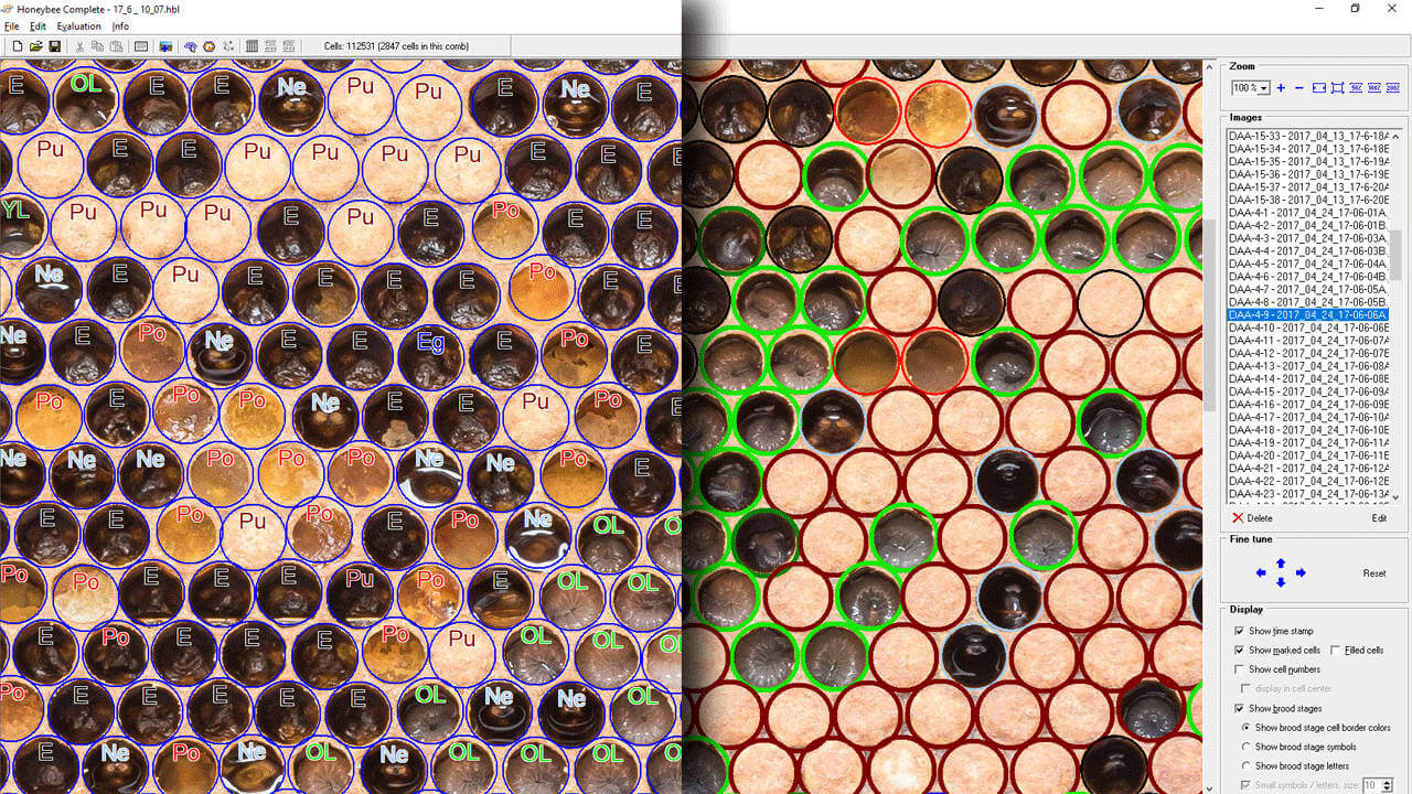 Honeybee brood software